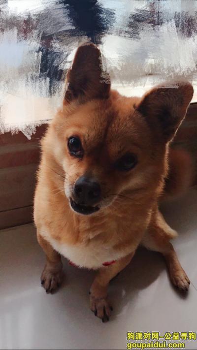 青岛寻狗启示,好心人帮忙找找吧,谢谢大家了,它是一只非常可爱的宠物狗狗,希望它早日回家,不要变成流浪狗。