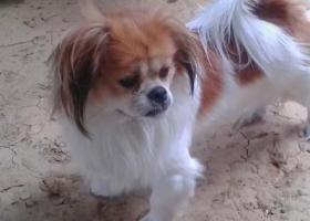 寻狗启示,寻找爱狗打赏500元,它是一只非常可爱的宠物狗狗,希望它早日回家,不要变成流浪狗。