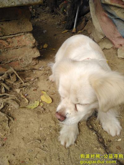 阳江找狗主人,在潭水镇看到 快来领他,它是一只非常可爱的宠物狗狗,希望它早日回家,不要变成流浪狗。
