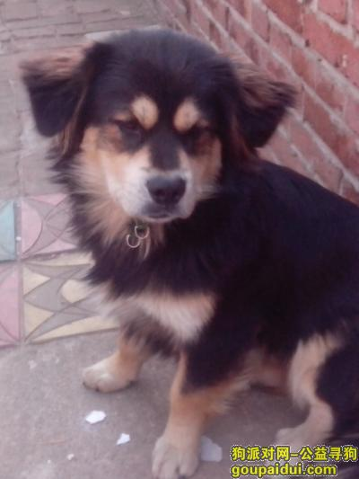 铁岭寻狗启示,找到狗狗的人打电话给我15141080568并给200块,它是一只非常可爱的宠物狗狗,希望它早日回家,不要变成流浪狗。