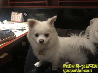荆门寻狗启示,重金寻狗在湖北省沈集镇丢失!!,它是一只非常可爱的宠物狗狗,希望它早日回家,不要变成流浪狗。