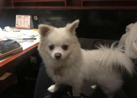 寻狗启示,重金寻狗在湖北省沈集镇丢失!!,它是一只非常可爱的宠物狗狗,希望它早日回家,不要变成流浪狗。