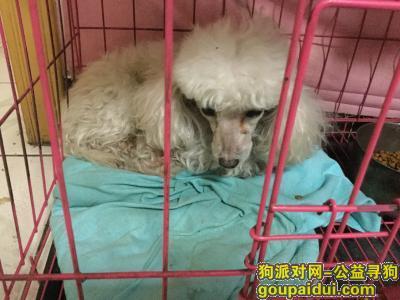【天津找狗】,天津河北区胜天里走失下午6点左右比照片干净,它是一只非常可爱的宠物狗狗,希望它早日回家,不要变成流浪狗。