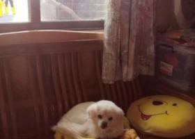 寻狗启示,广东省珠海市南香里社区寻狗求助,它是一只非常可爱的宠物狗狗,希望它早日回家,不要变成流浪狗。