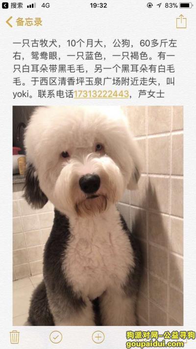 攀枝花寻狗启示,攀枝花西区寻找爱犬Yoki,它是一只非常可爱的宠物狗狗,希望它早日回家,不要变成流浪狗。