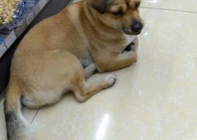 寻狗启示,年初无锡南禅寺朋友捡到一只狗。,它是一只非常可爱的宠物狗狗,希望它早日回家,不要变成流浪狗。