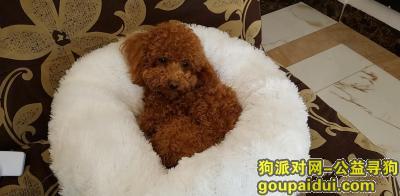 红河寻狗启示,寻找爱狗,希望看到的朋友帮帮忙,它是一只非常可爱的宠物狗狗,希望它早日回家,不要变成流浪狗。