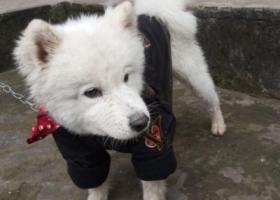 寻狗启示,垫江大顺街捡到的,全身雪白,它是一只非常可爱的宠物狗狗,希望它早日回家,不要变成流浪狗。