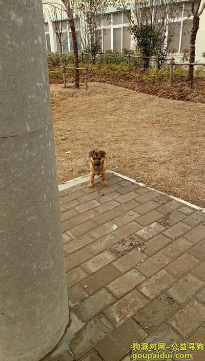 """马鞍山找狗,寻狗:老妈的""""乐乐"""",它是一只非常可爱的宠物狗狗,希望它早日回家,不要变成流浪狗。"""
