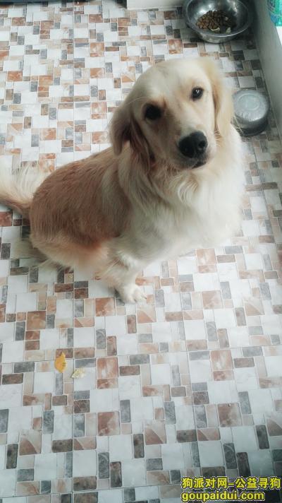,可儿,快点回来,妈妈很担心你,它是一只非常可爱的宠物狗狗,希望它早日回家,不要变成流浪狗。