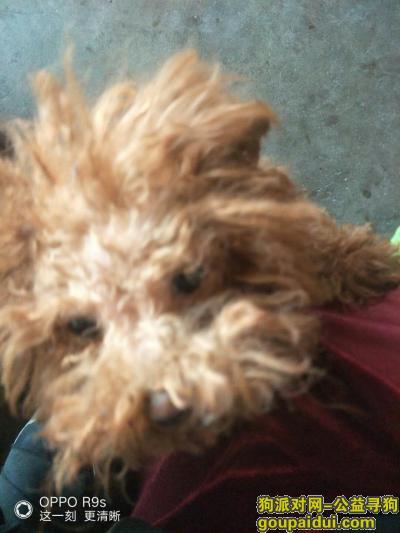 ,寻找我家宝贝爱犬!望早日找到,它是一只非常可爱的宠物狗狗,希望它早日回家,不要变成流浪狗。