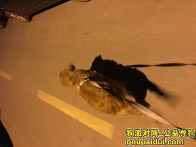 寻狗启示,在江宁区龙眠大道义务广场一月十五号捡到一只金毛,它是一只非常可爱的宠物狗狗,希望它早日回家,不要变成流浪狗。