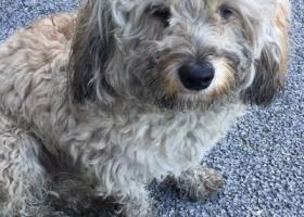 寻狗启示,拱墅区金华南路捡到一条米黄色的宝宝,它是一只非常可爱的宠物狗狗,希望它早日回家,不要变成流浪狗。