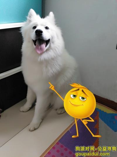【晋中找狗】,请好心人帮帮忙,帮助贝壳回家,它是一只非常可爱的宠物狗狗,希望它早日回家,不要变成流浪狗。