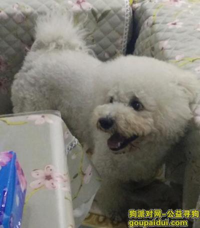 随州找狗,1,它是一只非常可爱的宠物狗狗,希望它早日回家,不要变成流浪狗。