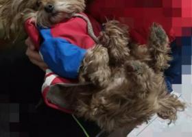 寻狗启示,5000元感谢费寻找爱犬,它是一只非常可爱的宠物狗狗,希望它早日回家,不要变成流浪狗。