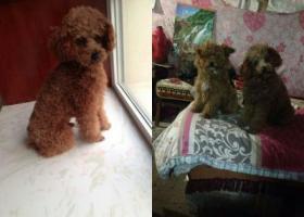 寻狗启示,于27号晚上八点半到九点在茶叶市场齐鲁茶城斜对面丢失一名公泰迪,它是一只非常可爱的宠物狗狗,希望它早日回家,不要变成流浪狗。