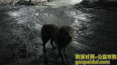 十堰找狗主人,有没有人的狗狗在浙江路附件走丢的?一只白色的狗狗,它是一只非常可爱的宠物狗狗,希望它早日回家,不要变成流浪狗。
