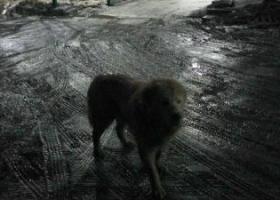 寻狗启示,有没有人的狗狗在浙江路附件走丢的?一只白色的狗狗,它是一只非常可爱的宠物狗狗,希望它早日回家,不要变成流浪狗。