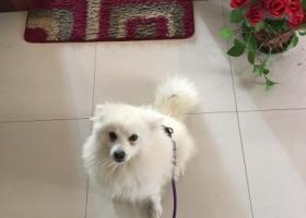 寻狗启示,银狐犬 红黑衣服体重12斤,它是一只非常可爱的宠物狗狗,希望它早日回家,不要变成流浪狗。