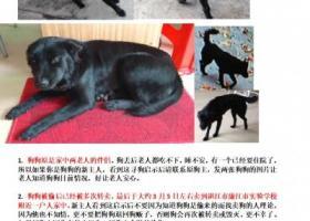 寻狗启示,朋友的狗狗被转卖到廉江市实验学校附近了,请大家帮忙找。,它是一只非常可爱的宠物狗狗,希望它早日回家,不要变成流浪狗。