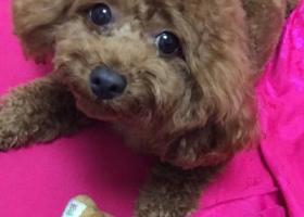 寻狗启示,乐乐丢失于18年2月23号下午4:30左右,它是一只非常可爱的宠物狗狗,希望它早日回家,不要变成流浪狗。