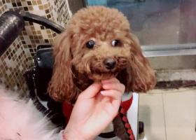 寻狗启示,乐乐丢失于2月23号苏州浒关,它是一只非常可爱的宠物狗狗,希望它早日回家,不要变成流浪狗。