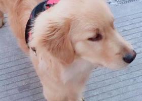 寻狗启示,掉了只狗听朋友说这网站有用义乌的永胜小区掉的应该是被抓了,它是一只非常可爱的宠物狗狗,希望它早日回家,不要变成流浪狗。