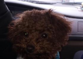 寻狗启示,三里街汽配城丢失,如有发现者请及时回复15715516711,它是一只非常可爱的宠物狗狗,希望它早日回家,不要变成流浪狗。