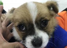 寻狗启示,我们家今天捡到了狗那是谁家的?,它是一只非常可爱的宠物狗狗,希望它早日回家,不要变成流浪狗。