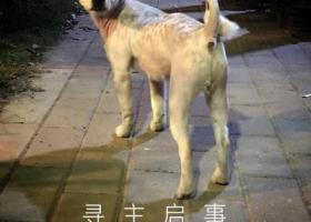 寻狗启示,海珠区太古仓附近 捡到小狗狗一只,它是一只非常可爱的宠物狗狗,希望它早日回家,不要变成流浪狗。