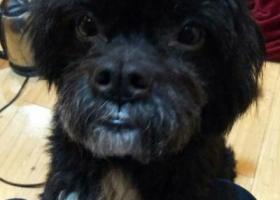 寻狗启示,北碚,西南大学寻爱狗,它是一只非常可爱的宠物狗狗,希望它早日回家,不要变成流浪狗。