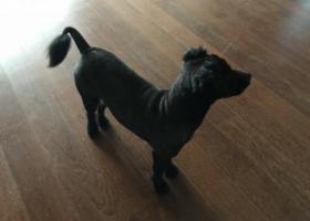 寻狗启示,今天下午在崂山区石老人山水名园二期捡到一只狗狗,它是一只非常可爱的宠物狗狗,希望它早日回家,不要变成流浪狗。