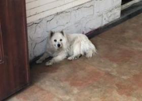 寻狗启示,丰台区晓月苑捡到一只狗,它是一只非常可爱的宠物狗狗,希望它早日回家,不要变成流浪狗。