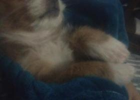 寻狗启示,寻找一只黄色的串串狗,它是一只非常可爱的宠物狗狗,希望它早日回家,不要变成流浪狗。