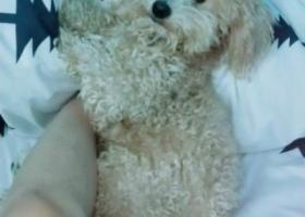 寻狗启示,寻狗启示 我家狗狗于2018年3月7日早上五点多在坦洲联一附近走失,名叫飞飞,体重11斤左右,香槟色。,它是一只非常可爱的宠物狗狗,希望它早日回家,不要变成流浪狗。