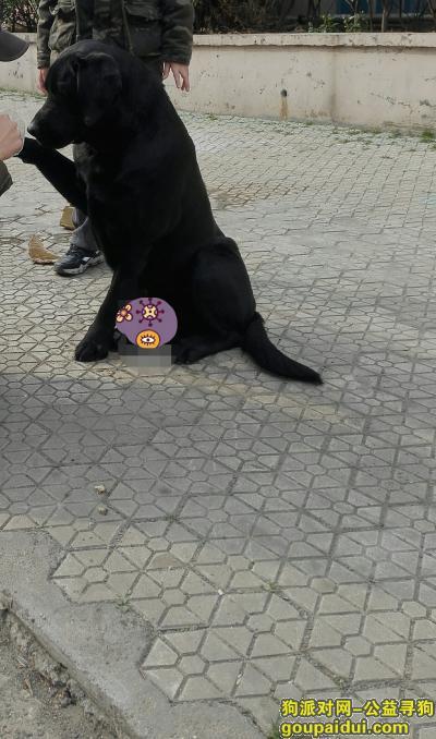 寻狗启示,3月13日晚,黑色拉布拉多犬福苑小区走失。,它是一只非常可爱的宠物狗狗,希望它早日回家,不要变成流浪狗。