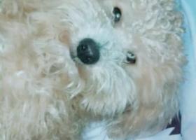 寻狗启示,坦洲联一附近走失帮忙留意一下,它是一只非常可爱的宠物狗狗,希望它早日回家,不要变成流浪狗。
