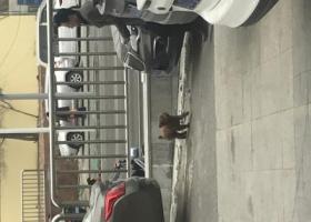 寻狗启示,济南市翡翠郡小区附近流浪咖啡色贵宾or泰迪,它是一只非常可爱的宠物狗狗,希望它早日回家,不要变成流浪狗。