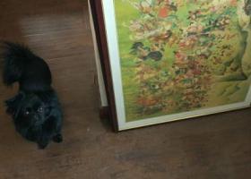 寻狗启示,青岛伊春路找寻黑色小狗!重谢!!,它是一只非常可爱的宠物狗狗,希望它早日回家,不要变成流浪狗。