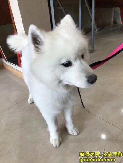 上饶寻狗启示,鄱阳城北丽湖星城走丢,它是一只非常可爱的宠物狗狗,希望它早日回家,不要变成流浪狗。