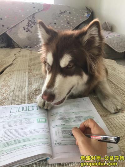 攀枝花找狗,寻找视为家人的爱犬,谢谢,它是一只非常可爱的宠物狗狗,希望它早日回家,不要变成流浪狗。