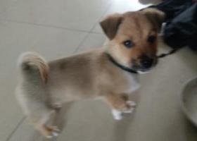 寻狗启示,苏州寻狗启示小狗叫嘟嘟,它是一只非常可爱的宠物狗狗,希望它早日回家,不要变成流浪狗。