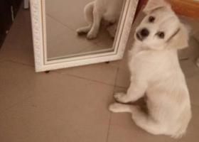 寻狗启示,寻找在金山国际丢失的泡泡狗狗,它是一只非常可爱的宠物狗狗,希望它早日回家,不要变成流浪狗。