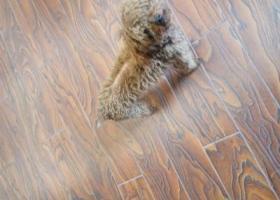 寻狗启示,看到一只无主狗,速速来领取,它是一只非常可爱的宠物狗狗,希望它早日回家,不要变成流浪狗。
