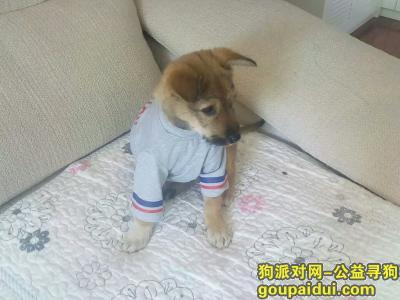 ,寻狗启示 校校  望好心人帮忙帮忙 在贵州省铜仁市江口县,它是一只非常可爱的宠物狗狗,希望它早日回家,不要变成流浪狗。