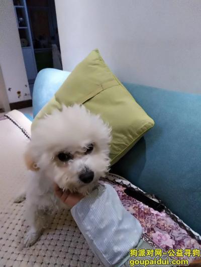 许昌寻狗,许昌市仓库路南段郭堂村,它是一只非常可爱的宠物狗狗,希望它早日回家,不要变成流浪狗。