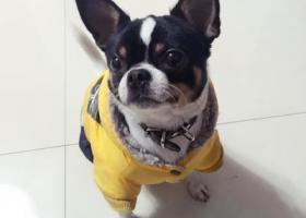 寻狗启示,请求好心人帮忙我家狗狗回家。,它是一只非常可爱的宠物狗狗,希望它早日回家,不要变成流浪狗。