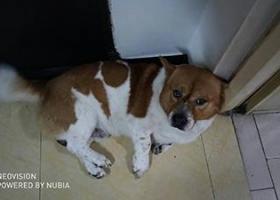 寻狗启示,【重金悬赏!!寻回挚爱狗狗】,它是一只非常可爱的宠物狗狗,希望它早日回家,不要变成流浪狗。