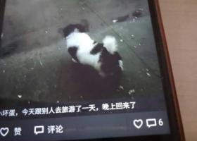 寻狗启示,我家狗狗于昨天晚上在东莞厚街三屯附近走丢,它是一只非常可爱的宠物狗狗,希望它早日回家,不要变成流浪狗。